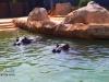 zoo-temara10