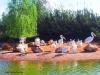 zoo-temara13