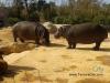 zoo-temara18