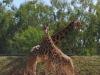 zoo-temara23